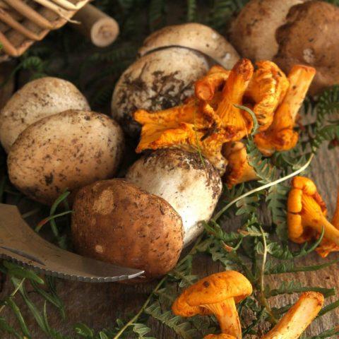 trouver des champignons